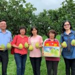 斗六文旦柚產地直送,農民農產品賣得出去,消費者直接買到好貨!
