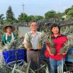 民雄鳳梨採行三安農法種植,吃到的人都讚不絕口