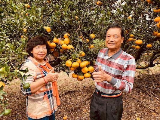 多位神農獎得主一起加持的茂谷柑,是年節送禮最佳的水果禮盒首選之一。(照片/台灣扶農協會提供)