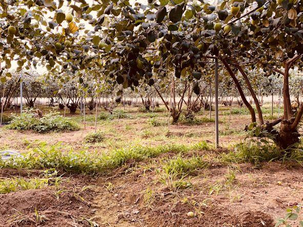 ▲符合三安農法的農園必須是大幅減少化學肥料及農藥使用,且農產品皆通過農藥殘留檢測。(照片/台灣扶農協會提供)