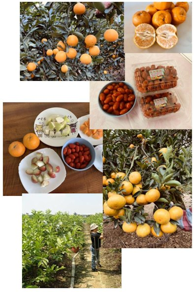 ▲每一種當季當時令的水果都要吃,是最好的養生保健之道。(照片/台灣扶農協會提供)