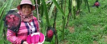 ▲嘉義縣傑出農民協會理事長郭素貞務農逾50年,堅持以環境安全、農業安全、食品安全為己任,並獲得神農獎殊榮。(照片/台灣扶農協會提供)