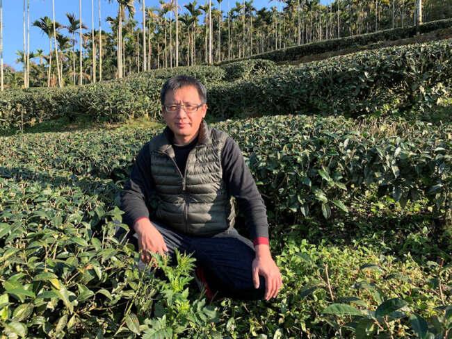 ▲金獅莊園連福製茶朱峰寬特別介紹茶園是以符合三安農法規範的方式栽植。(照片/台灣扶農協會提供)